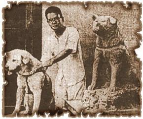 《现实中日本历史上忠犬八公的故事》